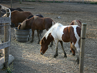 clôture équestre